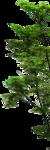 флора01.png
