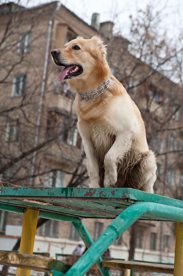 собака лефортово