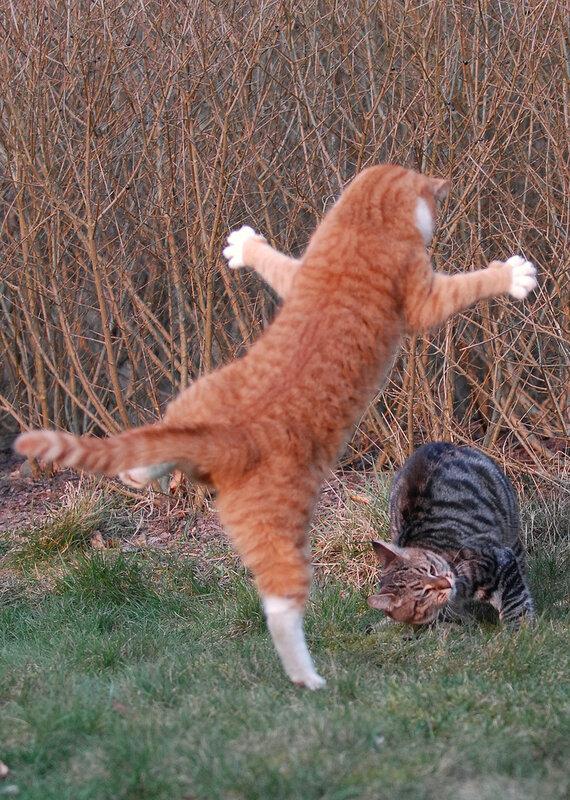Кошки тоже чувствуют, что и люди
