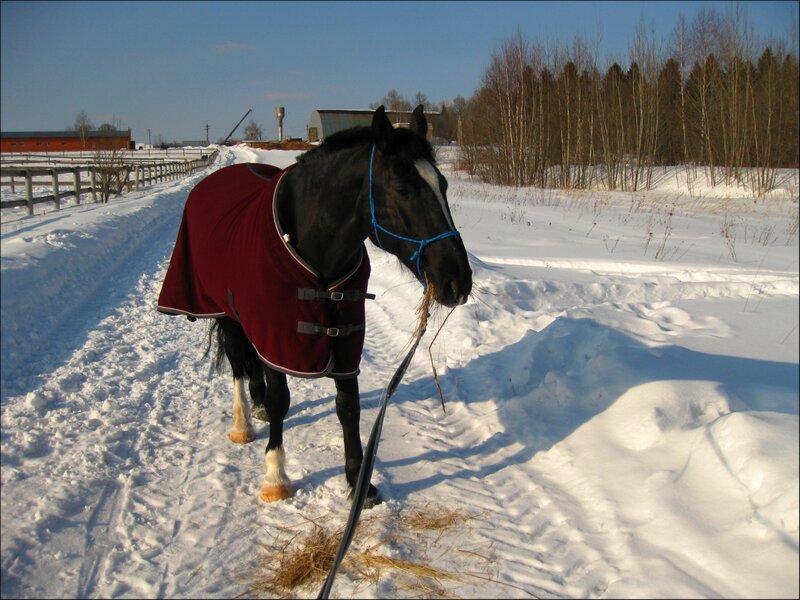 И нашла лошадь на дороге сено...