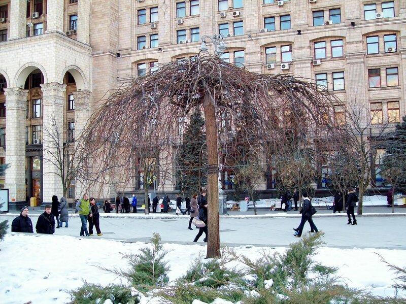 Дерево на Майдане Незалежности