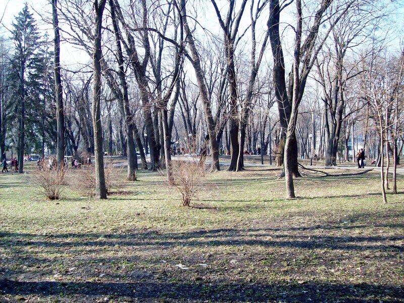 Природа Мариинского парка весной