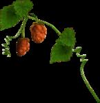 """Скрап набор """"цветочная улыбка"""" 0_74076_21d8def8_S"""