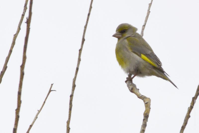 Перелетные птицы южного урала фото