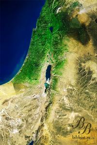 Растительность в регионе Израиля