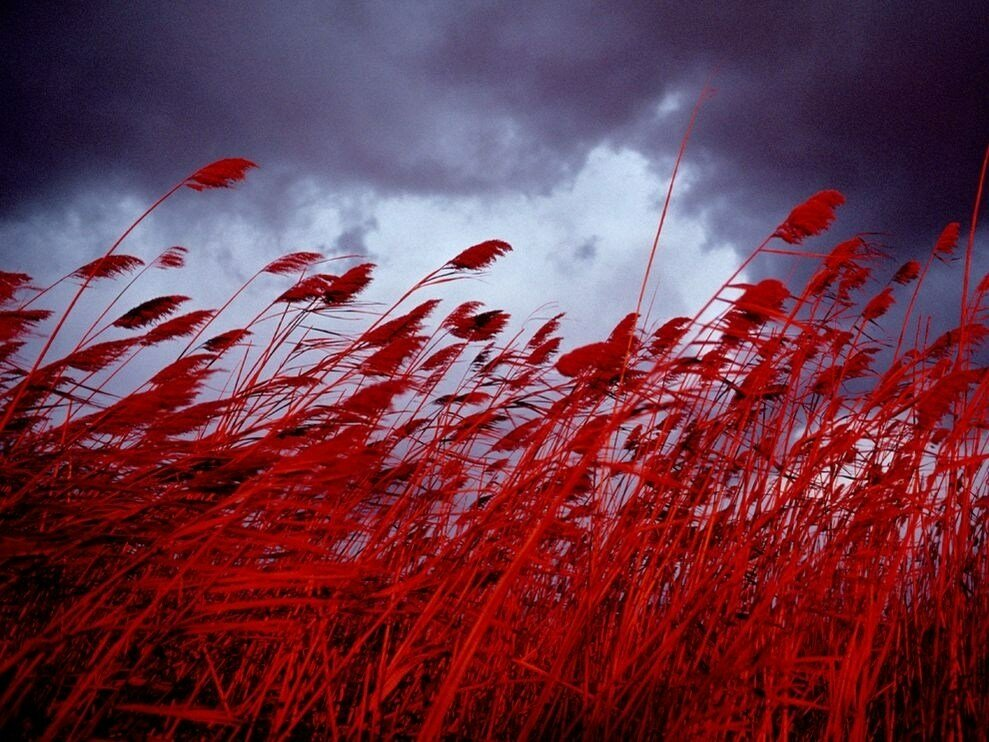 Life in color: Red. By National Geographic