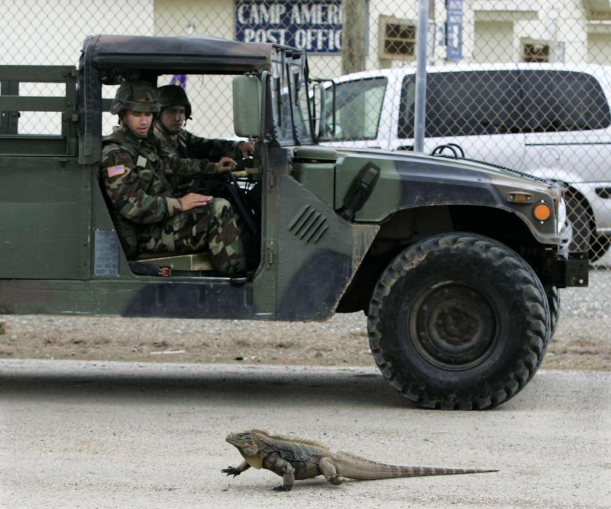 Кубинский ящер Юрского периода на пути у американских военных