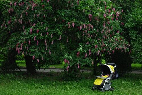 пасмурный день в ботаническом саде