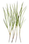 feli_syd_foliage1.png