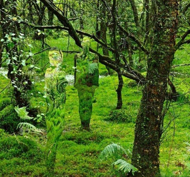 Невидимки в шотландском лесу