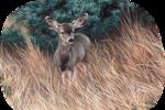 фауна01.png