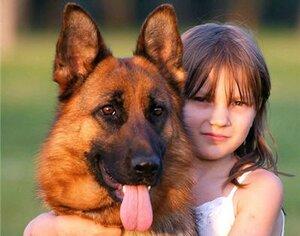 Как правильно приобрести собаку