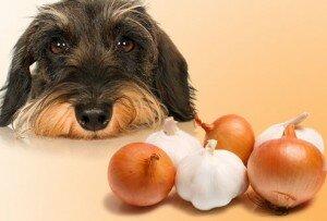 Питательные вещества для собаки
