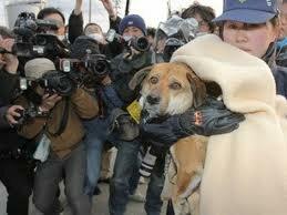 Несчастную собаку вертолётом доставили домой