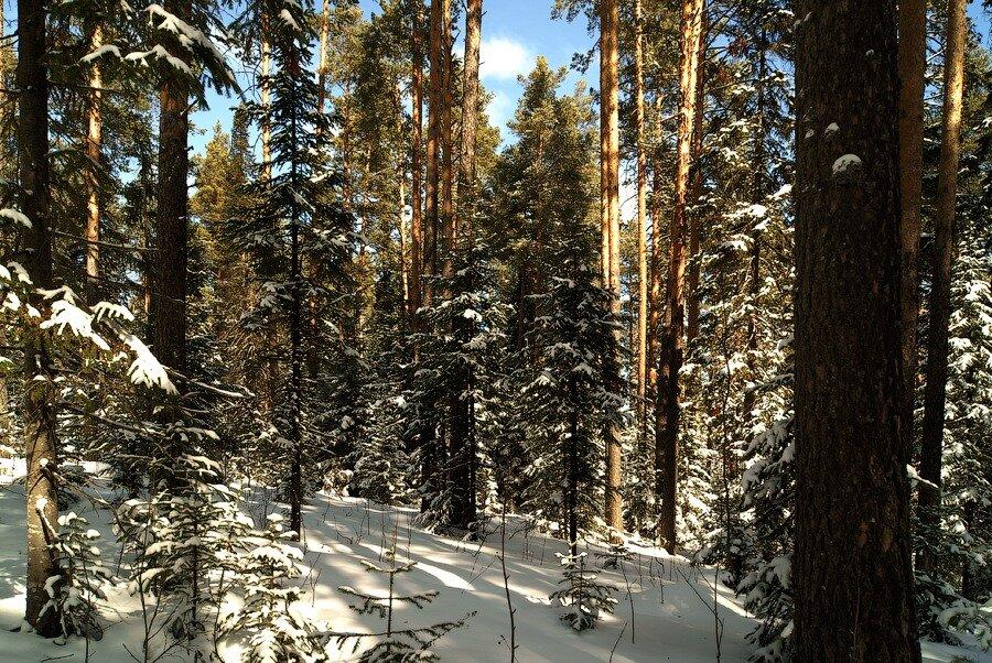 Конец марта в уральском лесу!
