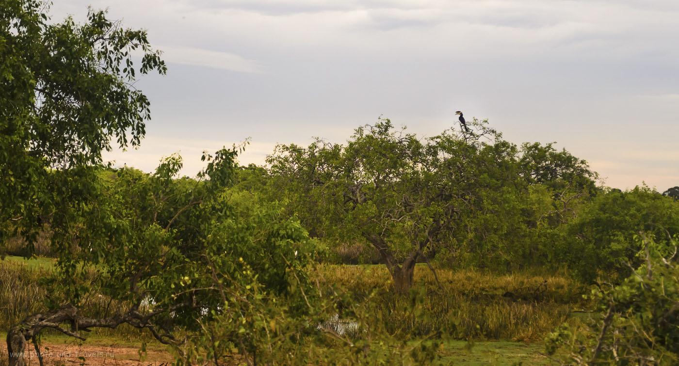 20. Фото. Видели ли вы не в зоопарке, а в природе дикого тукана? Во время тура в заповедник на Шри-Ланке увидите их десятки (640, 55, 5.6, 1/1000)