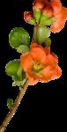 "Скрап набор ""цветочная улыбка"" 0_74018_f758ef82_S"