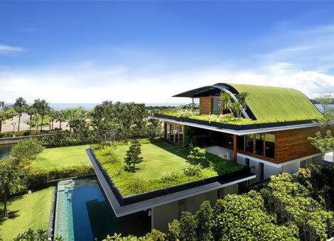 Живая зелень в нашем доме