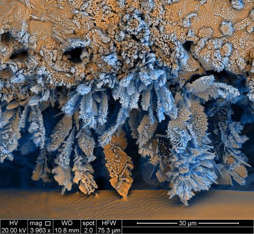 Фотографии, сделанные с помощью электронного микроскопа