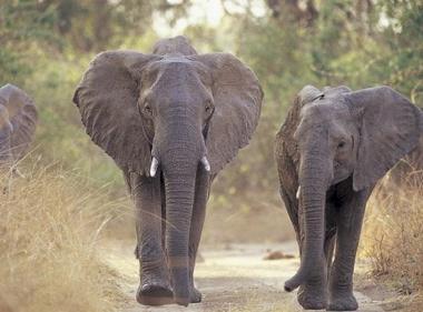 10 интересных фактов про животных