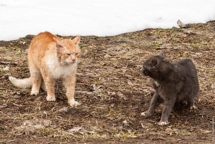 кошачья драка