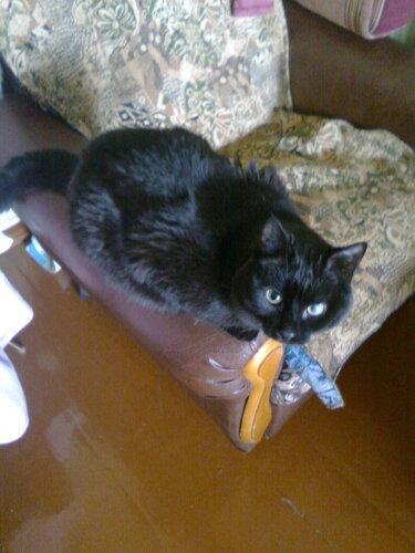 Маленький такой котик живёт у моего крёстного :-)