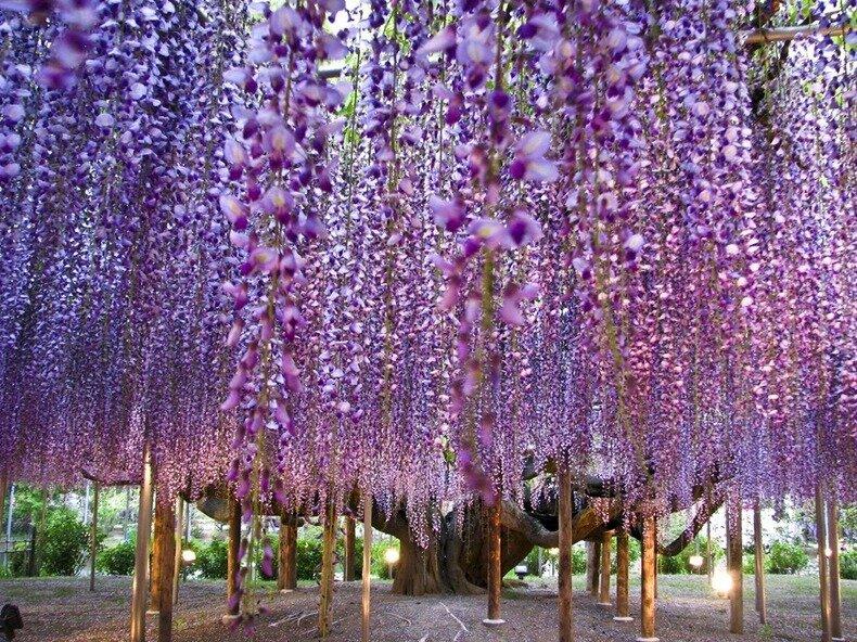 парк цветов асикага фото