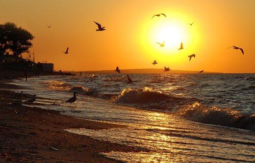 Море, чайки и прибой.