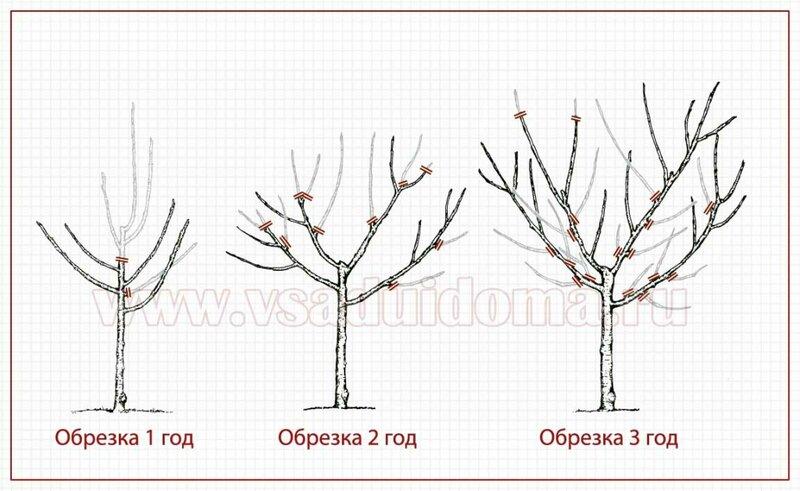 Правильная обрезка деревьев и