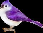 птица38.png