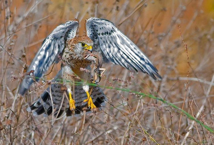 Птицы после охоты