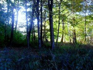 В лесах осенних, у Горячего Ключа ... SAM_4084.JPG