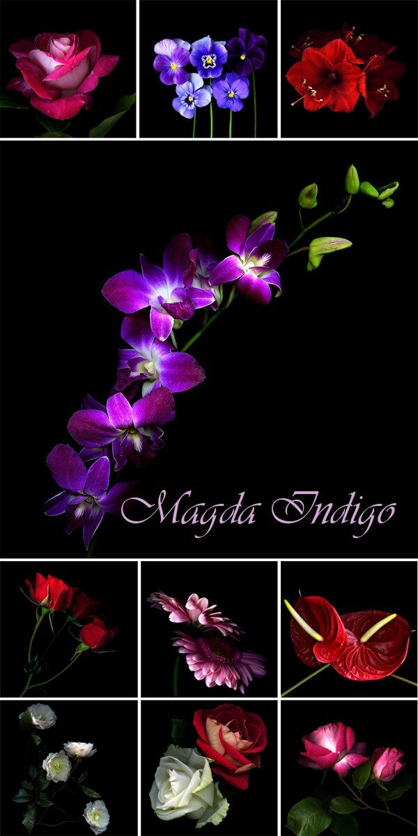 цветы фотография