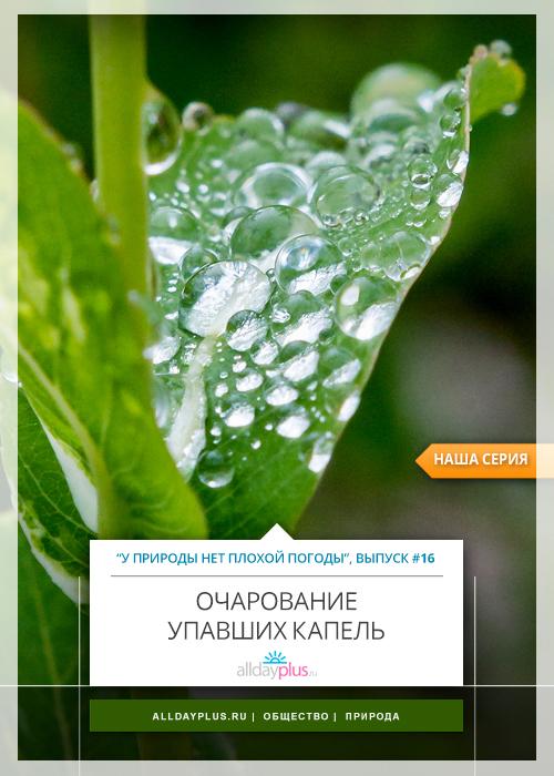У природы нет плохой погоды, выпуск # 16 | Очарование упавших капель.