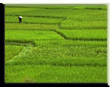 Китай о.Хайнань