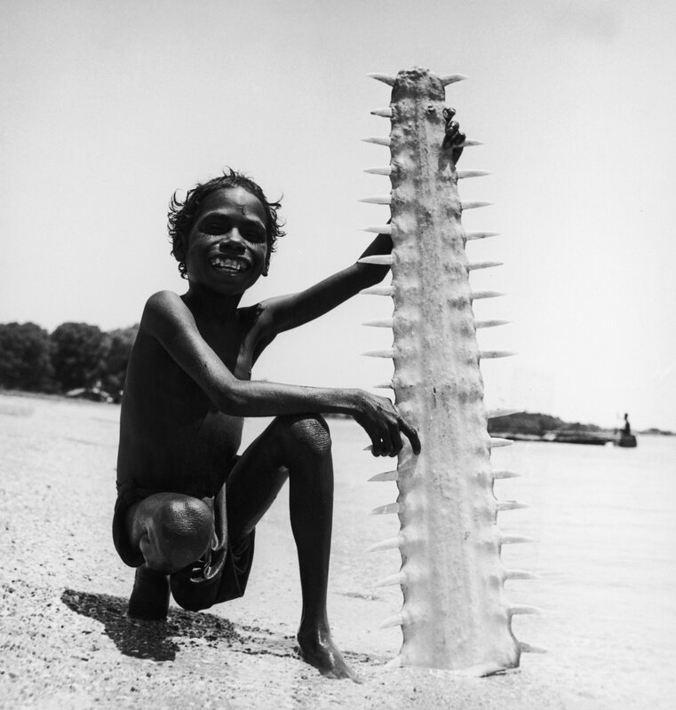 Sawfish Saw