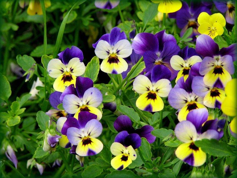 Цветочки-бабочки