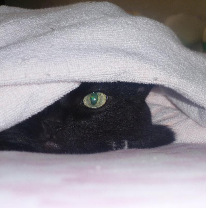 Кошачья веб-камера