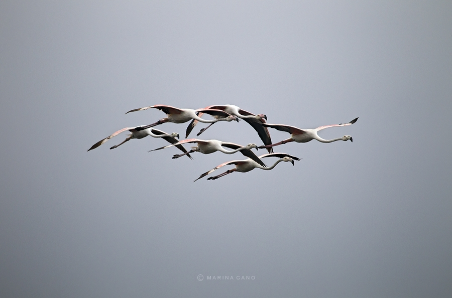 Дикая природа. Фотограф Марина Кано