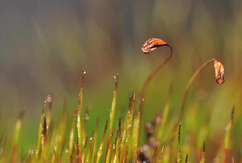 Альберткин писал(а). Я опупел. а еще я обнаружил что мох пророс. посмотрел снимки и понял... я не использую камеру и...