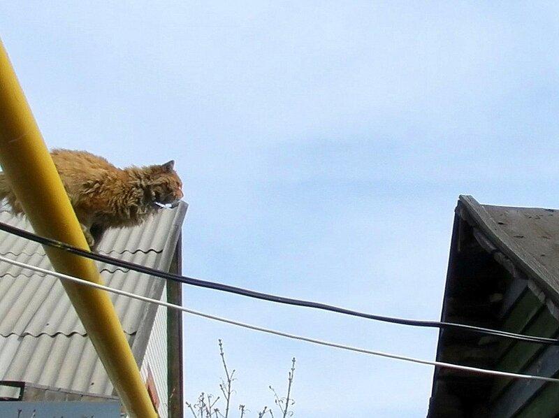 А Вы видали, как коты летают?