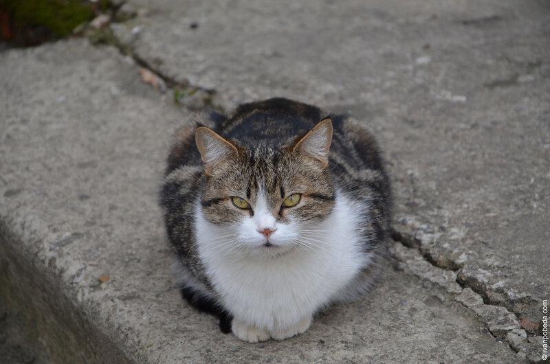Ставропольские котики