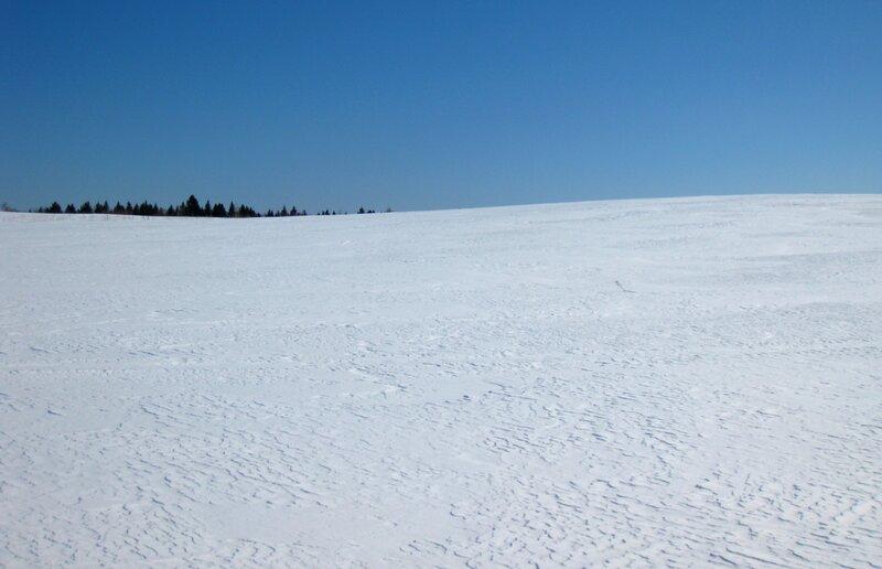 Голенищевское поле