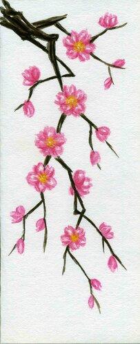 Вишня цветущая рисунок
