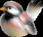 птица7.png