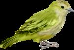 птица11.png