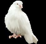 птица41.png