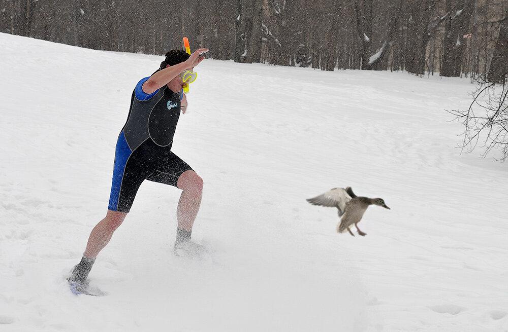 зимой в ластах прикол фото кошка собака