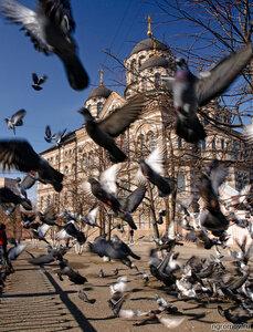 Иоанновский монастырь (голубь, Иоанновский монастырь, Петербург, птица)