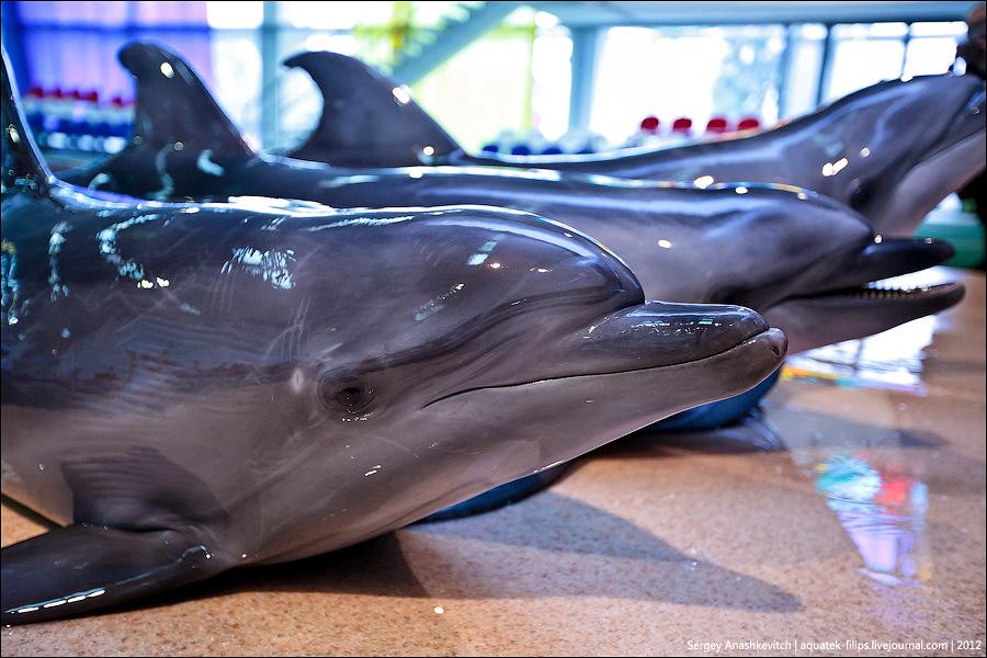 Партенитский (Алуштинский) дельфинарий
